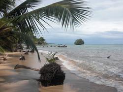 Tropical sandy beaches