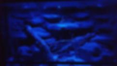 Leopardgecko Eublepharis macularius Leos Anschaffungen Kauf Vorbereitungen Informationen