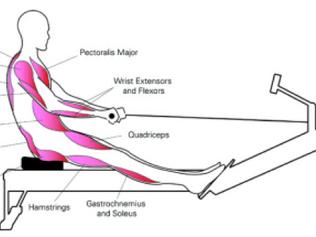 Conheça os benefícios do Remo que vão além do condicionamento físico