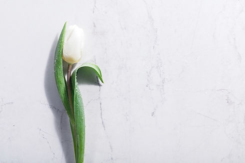 single-white-spring-flower-on-a-marble-b