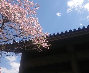 京都への想いと父