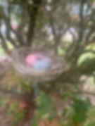 skylar nest 1.jpeg