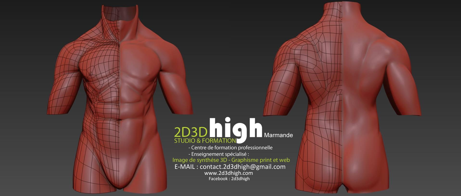 Travail d'anatomie - wireframe