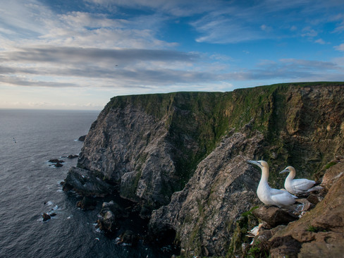 Gannet looking out By Josh Jaggard