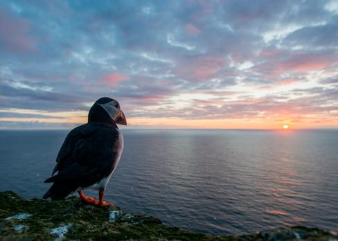 Sunset by Josh Jaggard