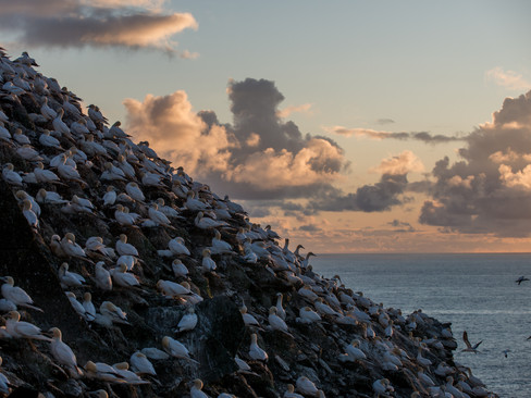 Sunset colony By Josh Jaggard