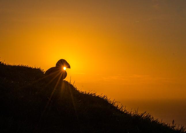 Bursting Sun by Josh Jaggard