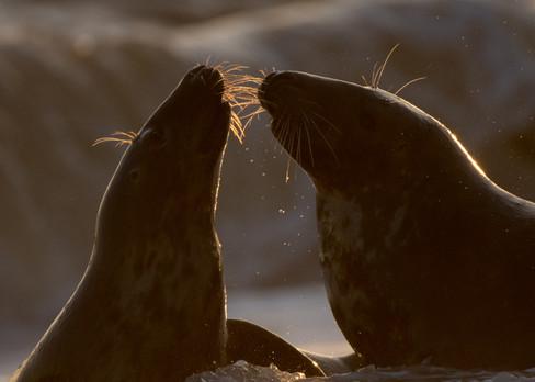 Morning kiss by Josh Jaggard