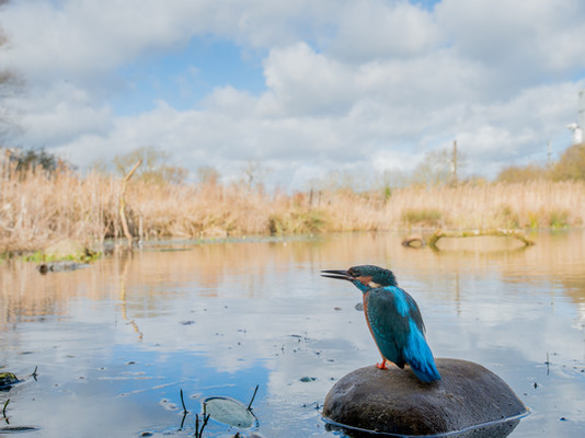 Wide angle kingfisher By Josh Jaggard