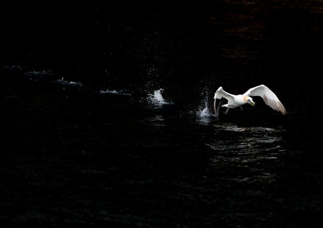 Running on water By Josh Jaggard
