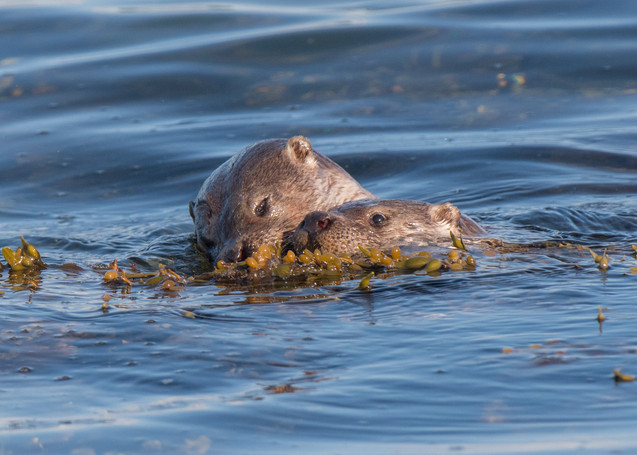 Playing in the sea By Josh Jaggard
