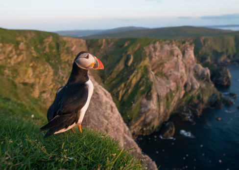 Puffin cliff by Josh Jaggard