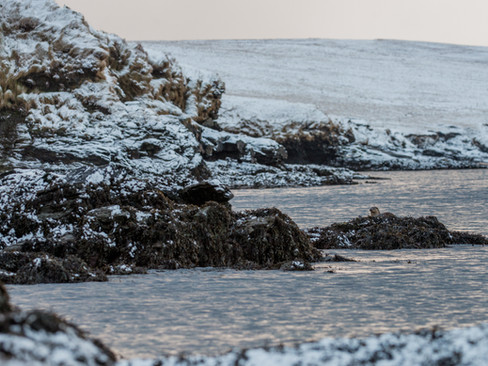 Otter in the snow By Josh Jaggard