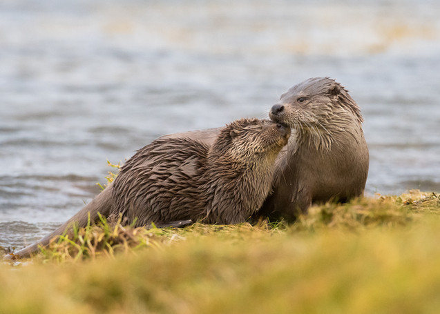 Mum and cub affection By Josh Jaggard
