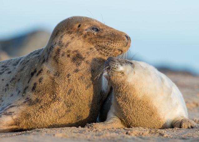 Mothers kiss by Josh Jaggard