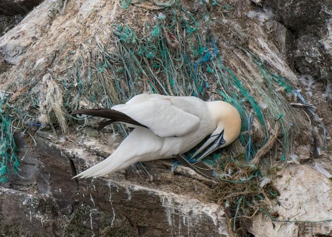 Plastic nest By Josh Jaggard