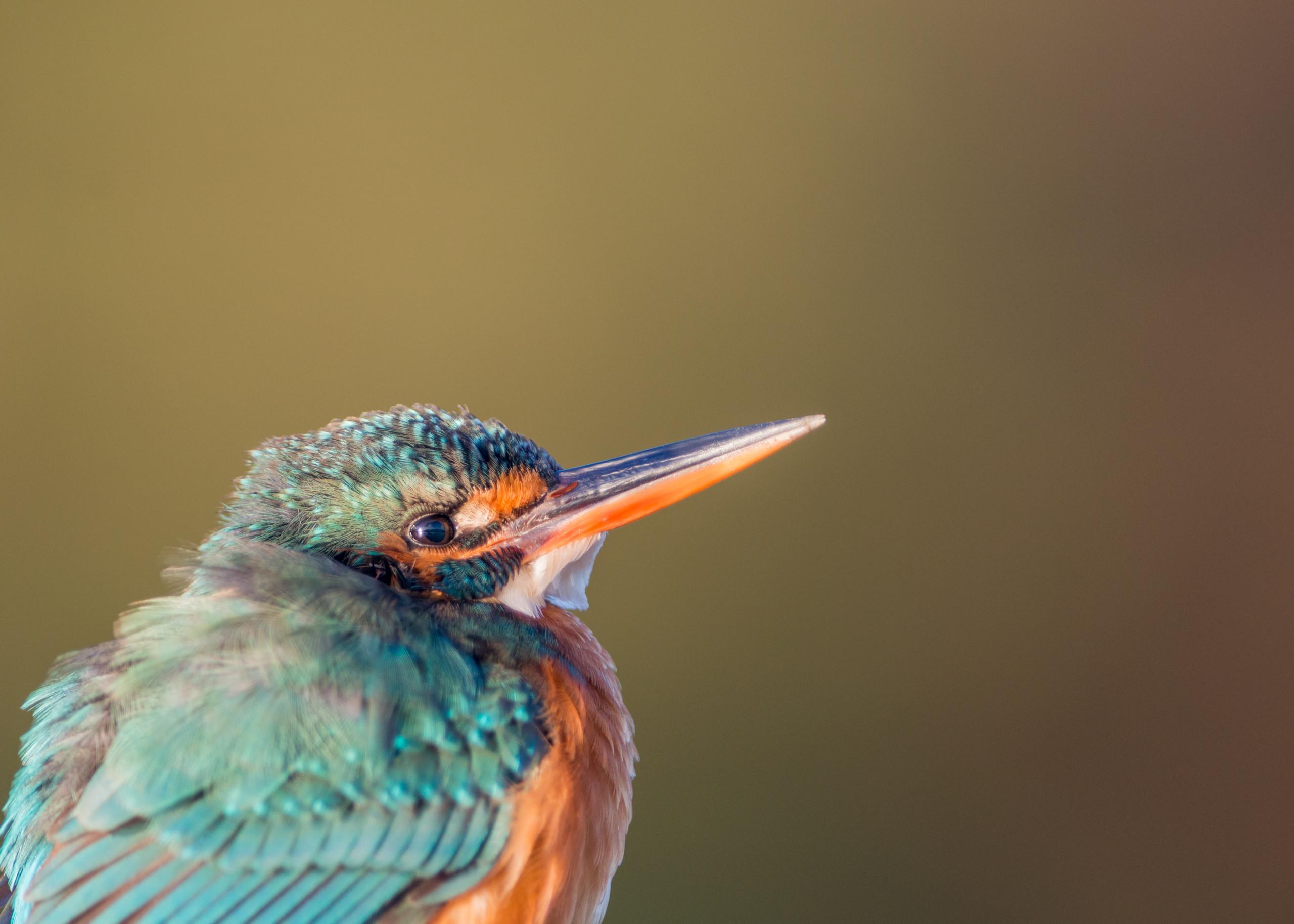 Kingfisher from Josh Jaggard floating hide