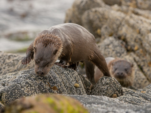 Otter search By Josh Jaggard
