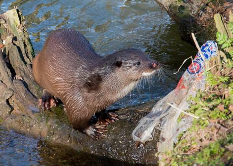 Otter bag By Josh Jaggard