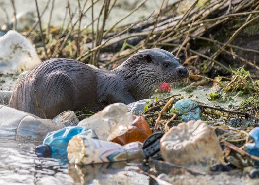 River of plastic By Josh Jaggard