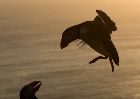 Silhouette landing by Josh Jaggard