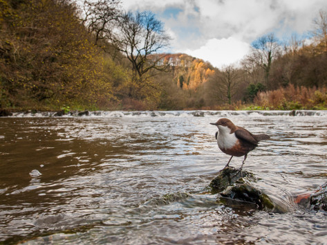 Dipper wide angle By Josh Jaggard