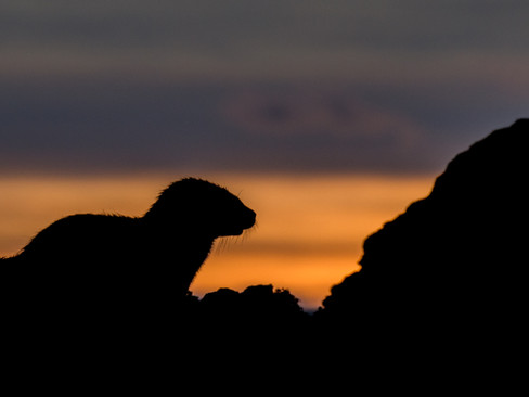 Sunset silhouette By Josh Jaggard