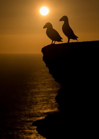 Sunset love by Josh Jaggard