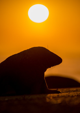 Sunrise silhouette by Josh Jaggard