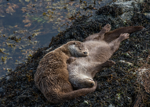 Sleeping at high tide By Josh Jaggard