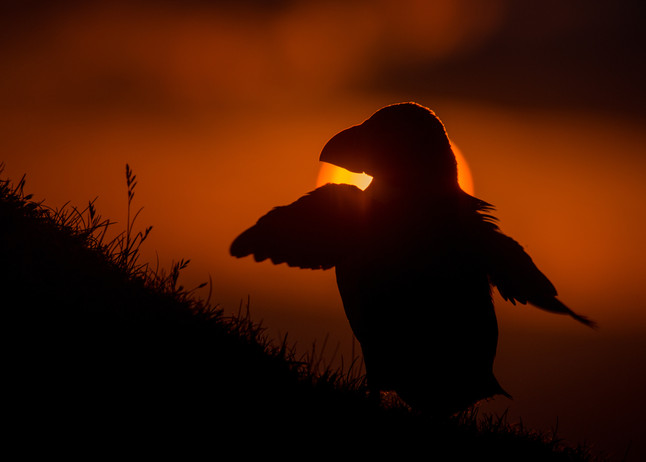Sun flap by Josh Jaggard