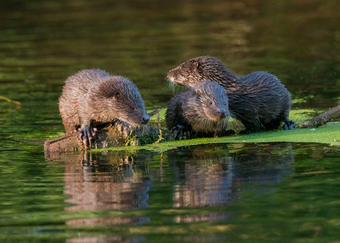Wild otter workshop by Josh Jaggard