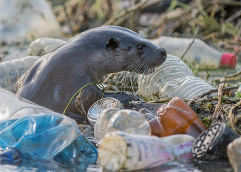 Plastic otter By Josh Jaggard