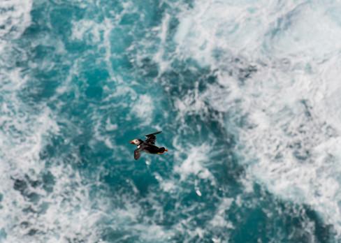 Rough flight by Josh Jaggard