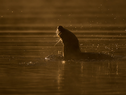 Otter shaking By Josh Jaggard