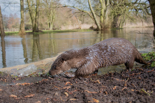 Wide angle otter pollution By Josh Jaggard