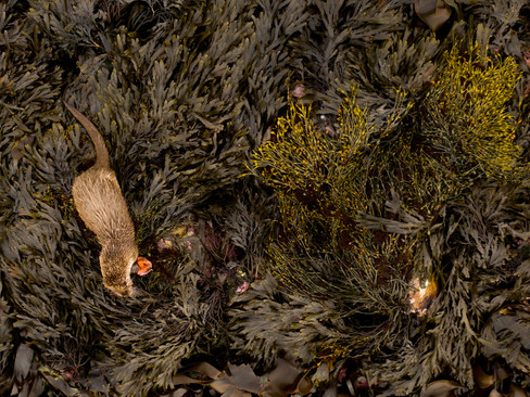 Otter from above By Josh Jaggard