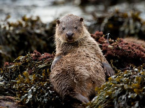 Otter resting By Josh Jaggard