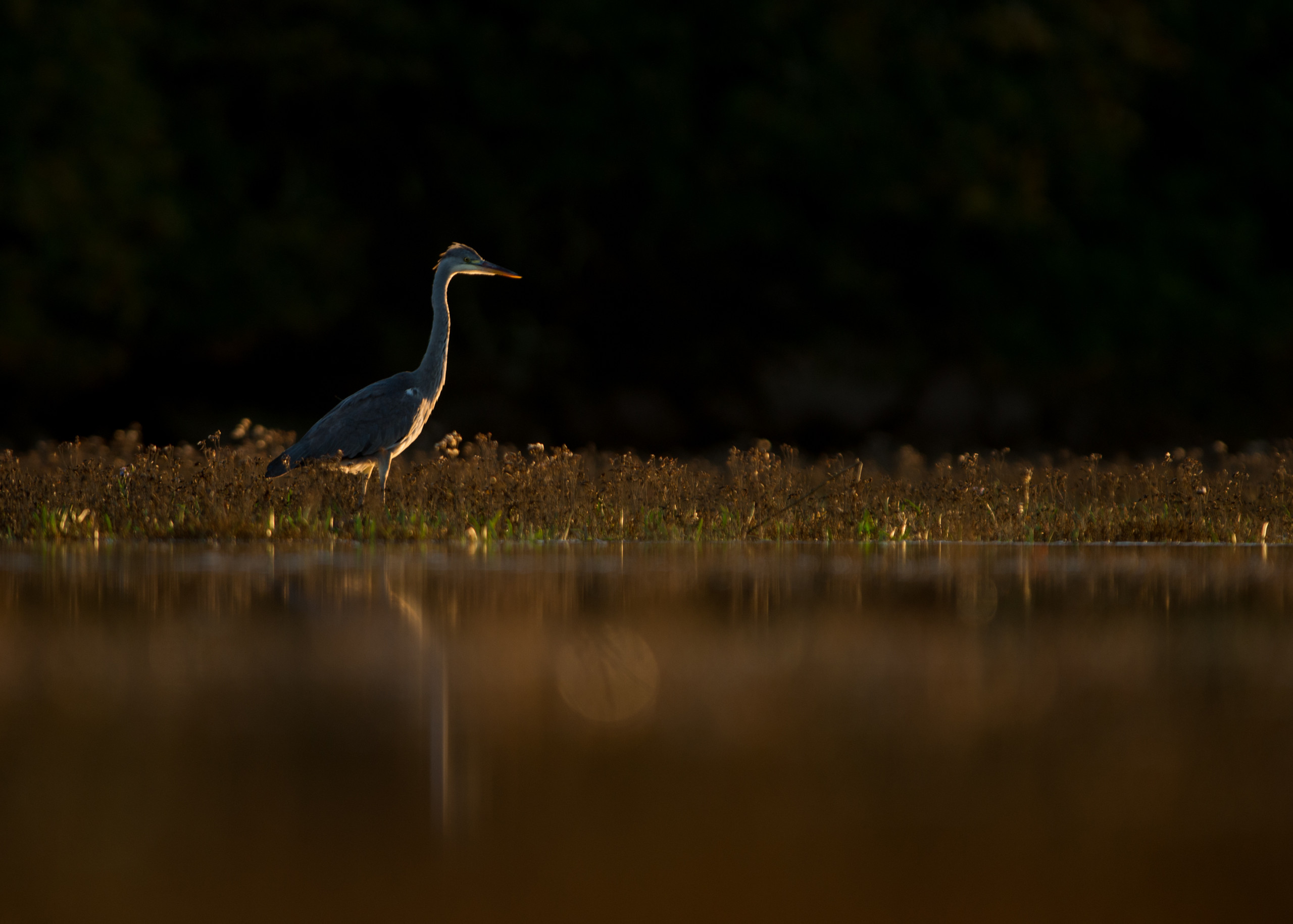 Heron from Josh Jaggard floating hide