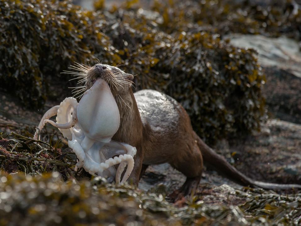 Octopus for dinner By Josh Jaggard