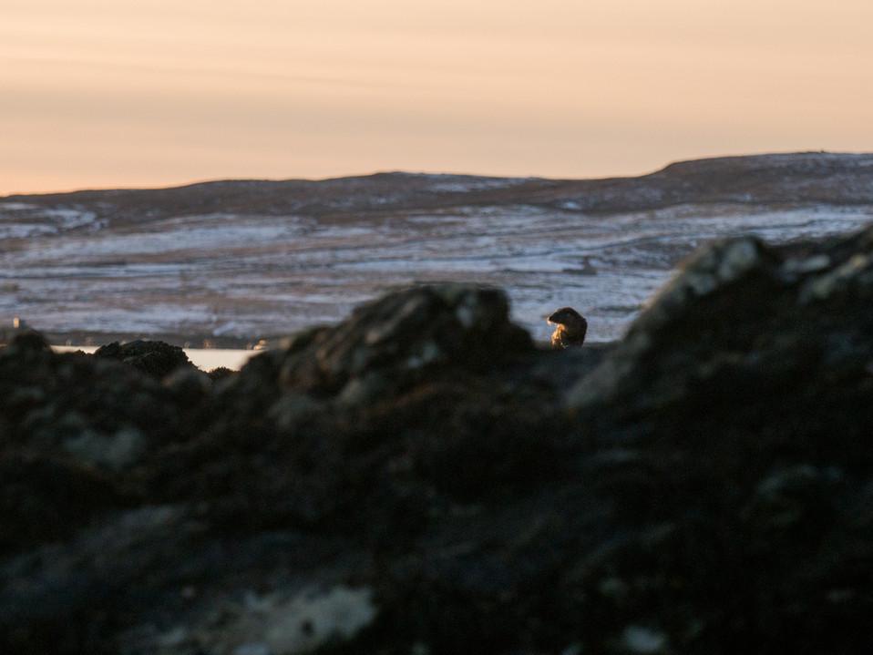 Otter landscape By Josh Jaggard