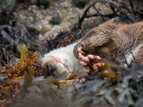 Paws and chin by Josh Jaggard