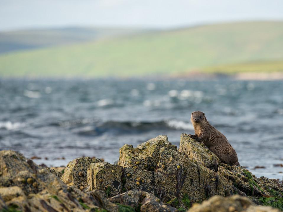 Otter habitat By Josh Jaggard