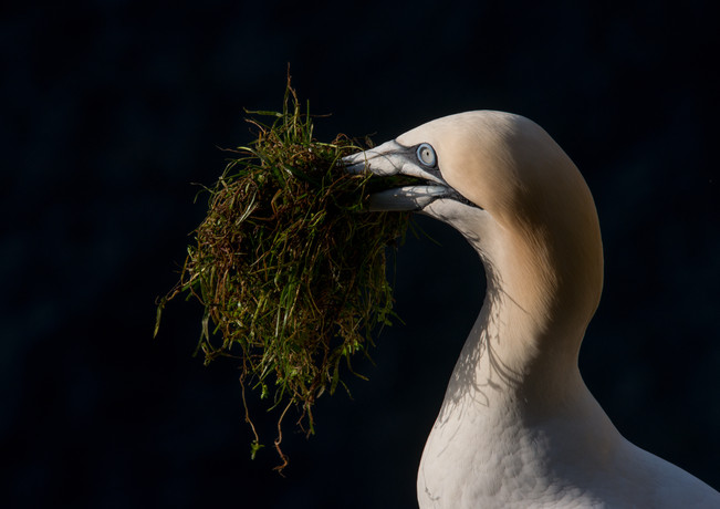 Collecting grass By Josh Jaggard