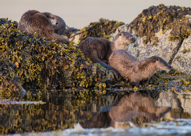 Family reflection By Josh Jaggard