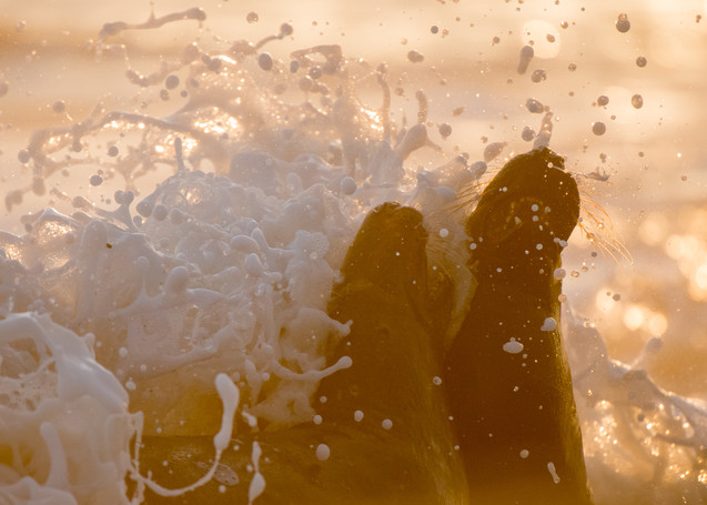 White wash by Josh Jaggard