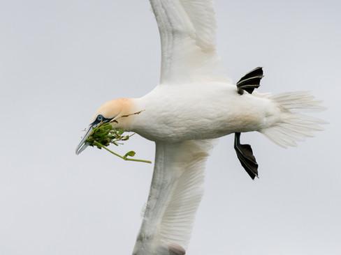 Nesting grass By Josh Jaggard