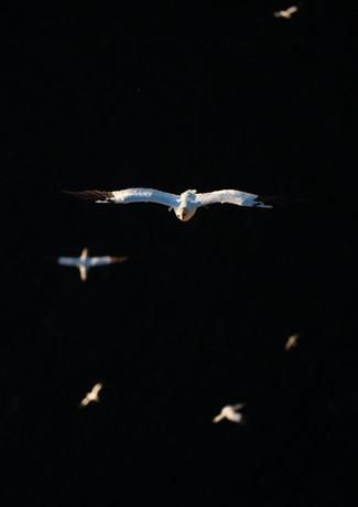Flying in the dark By Josh Jaggard