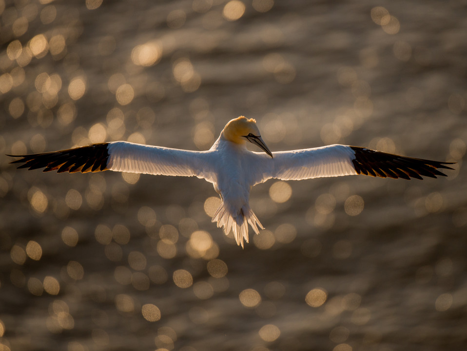 Over the shoulder By Josh Jaggard