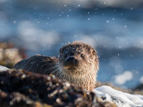 Otter splash By Josh Jaggard